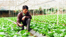 Nông-Lâm nghiệp xanh làm nên 'sức sống xanh' Vĩnh Phúc