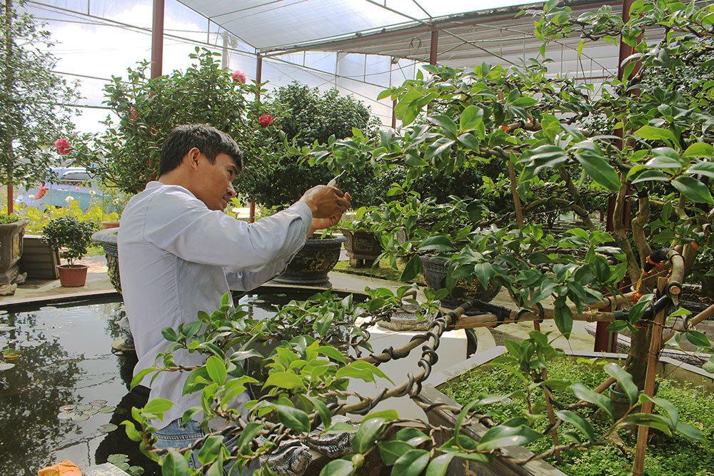 Do cây trà có bộ rễ yếu, chịu nắng kém nên anh Biên phải chăm sóc rất cẩn thận.