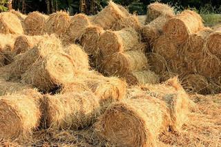 Kiếm tiền tỷ từ… 'rác' nông nghiệp