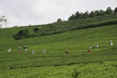 Những nhà nông thời 4.0