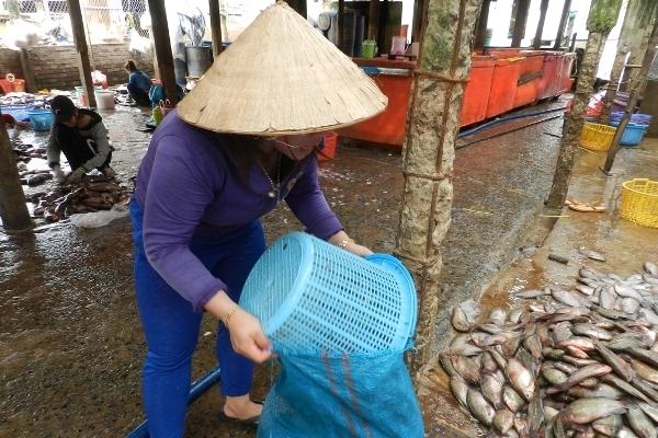 An Giang: Bí ẩn người mua gom vảy cá khắp các chợ
