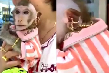 Chú khỉ nhà đại gia: Vàng lủng lắng, xài dưỡng da, ăn nho Mỹ