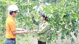 Có chuẩn GlobalGAP, nông dân ung dung lãi trăm triệu/vụ