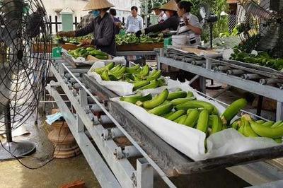 Dân huyện nghèo nhất nước kiếm trăm triệu/vụ nhờ chuối xuất Nhật