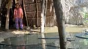 Hậu quả khôn lường từ dự án lấp sông ở Long An