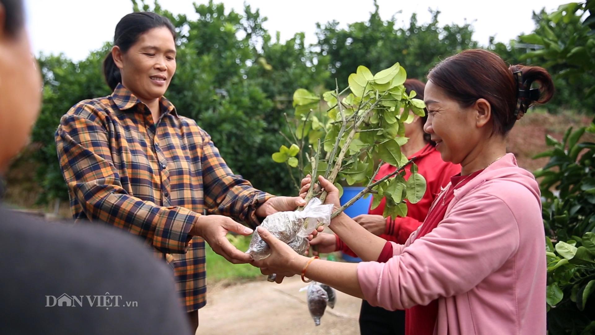 Bỏ việc, bán nhà Hà Nội về quê trồng cả đồi bưởi thu tiền tỷ