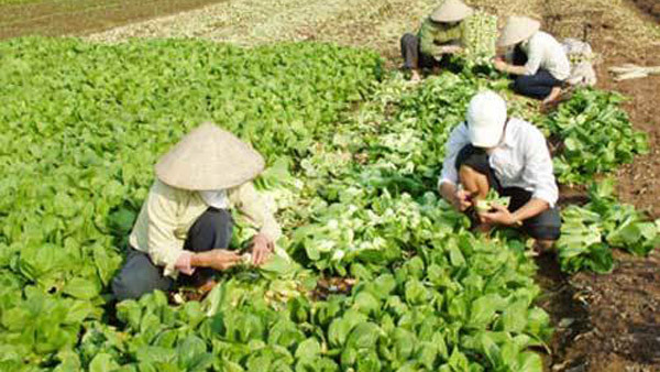 2018: nông dân Hà Nội kiếm 46 triệu đồng/người