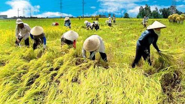 Hội nông dân Việt Nam đã có 10,2 triệu thành viên