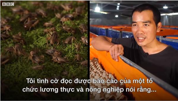 DN kỳ vọng đưa sản phẩm từ dế vào bữa ăn người Việt