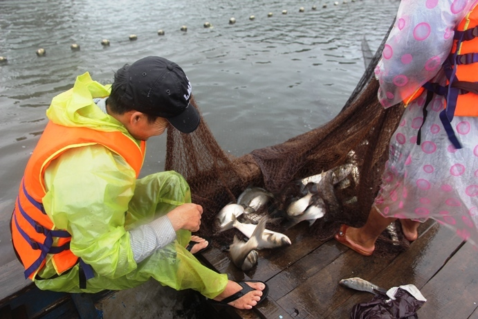 xả lũ,ngập lụt,Quảng Nam