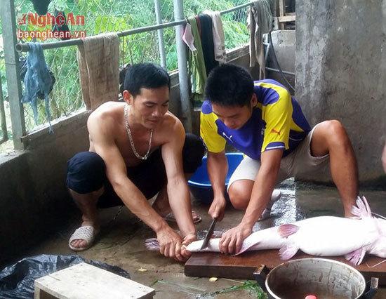 Bí ẩn miền Tây xứ Nghệ: Loài cá nặng hàng yến, dài cả mét