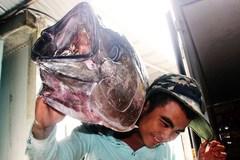 Vua săn 'cọp biển' xây biệt phủ ở Bình Định