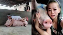 Lạ và độc: Cô gái kiếm bộn tiền nhờ... hô hấp nhân tạo cho lợn