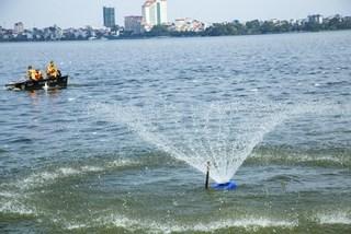Chết 200 tấn cá: Hồ Tây nguy cơ thành hồ chết