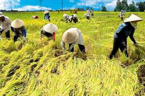 Nông nghiệp thăng tiến, nông dân vẫn lắc lư dễ ngã