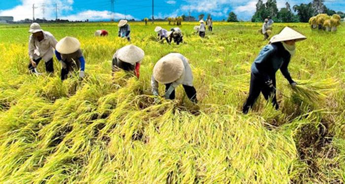 nông nghiệp Việt Nam,nông dân,xuất khẩu nông sản