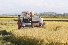 Nghệ An thưởng xã nông thôn mới 550 triệu đồng