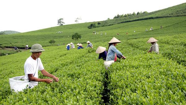 Tuyên Quang: 2 năm, 16.183 hộ thoát nghèo