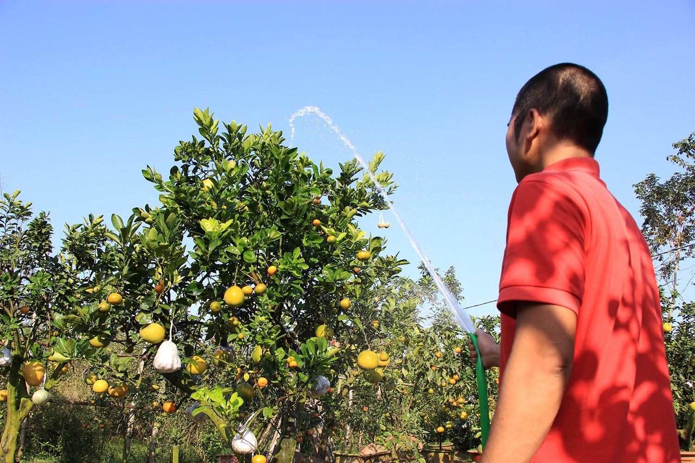 Mười loại quả cùng chín rộ trên... một thân cây