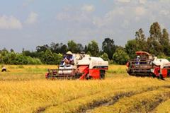 Agribank: Tiếp tục khẳng định vai trò chủ lực trong đầu tư 'Tam nông'