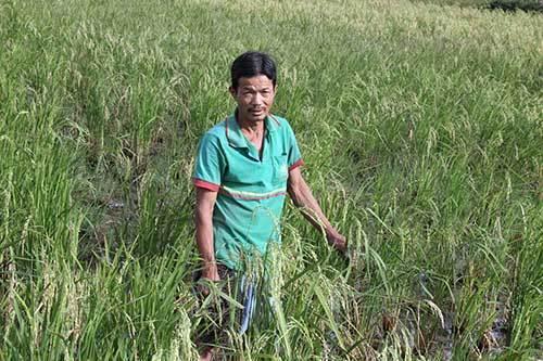 Chuyện khó tin nơi làng săn 'cọp biển' số 1 Đông Nam Á ở Bình Định