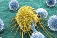 Liệu pháp miễn dịch trong chẩn đoán và điều trị ung thư