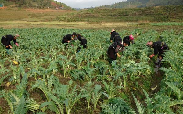 Con đường đưa dược liệu thành thế mạnh của Việt Nam