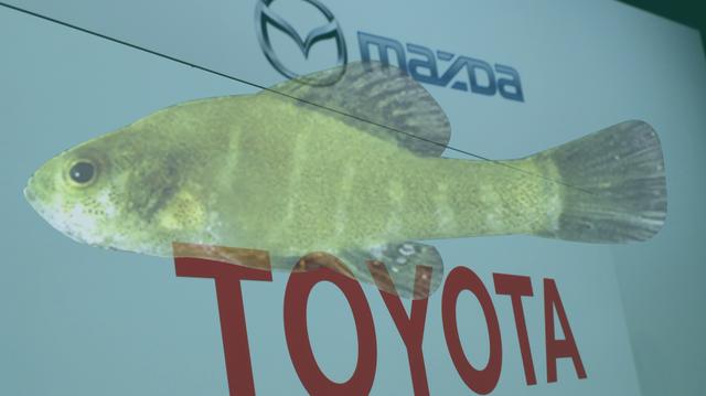 Toyota và Mazda tốn 6 triệu USD để đền bù cho tổn thất về môi trường