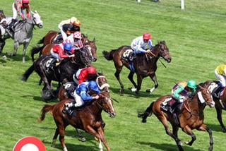 Chính phủ đồng ý bổ sung trường đua ngựa vào quy hoạch Hà Nội