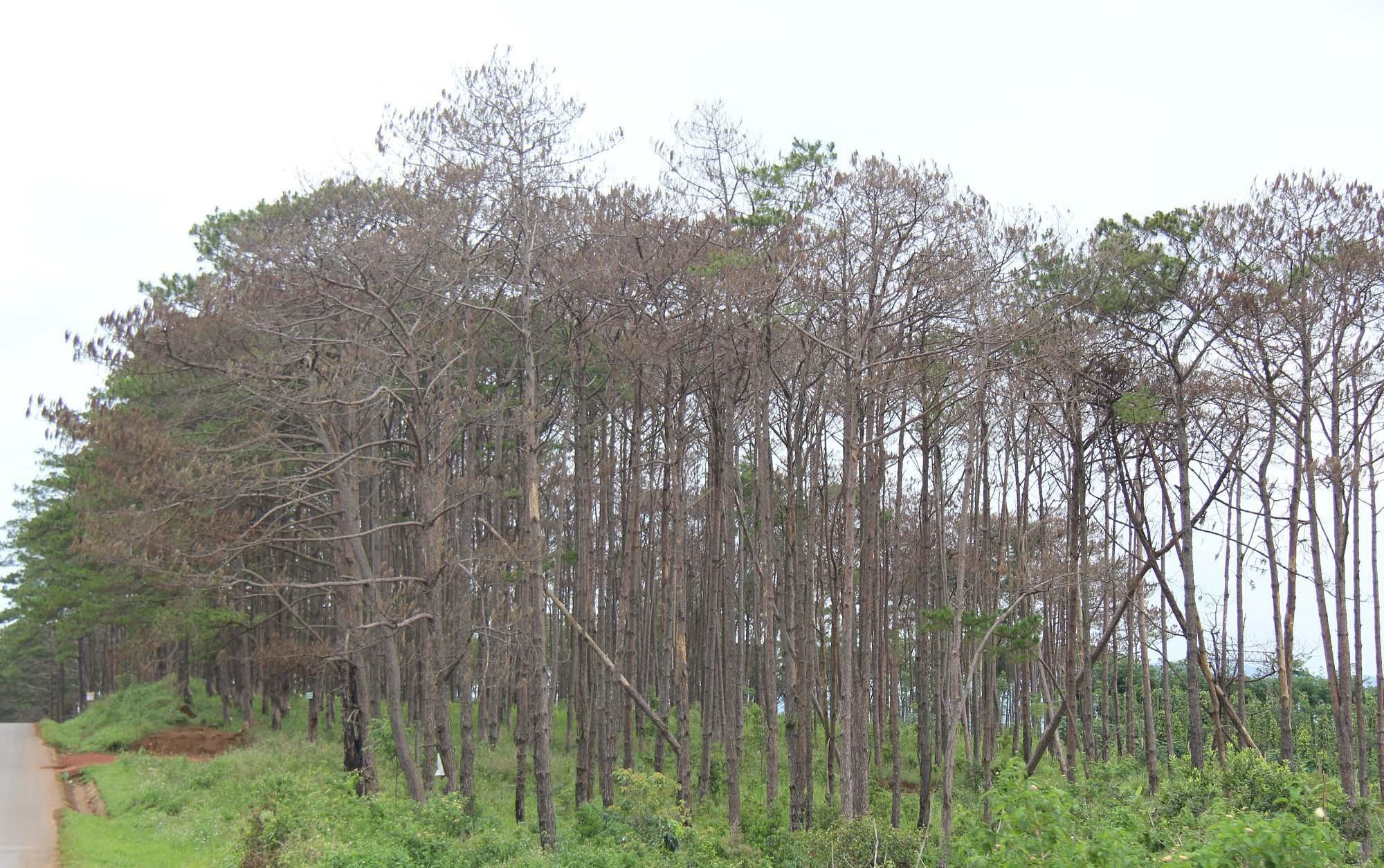 phá rừng,Đắk Nông