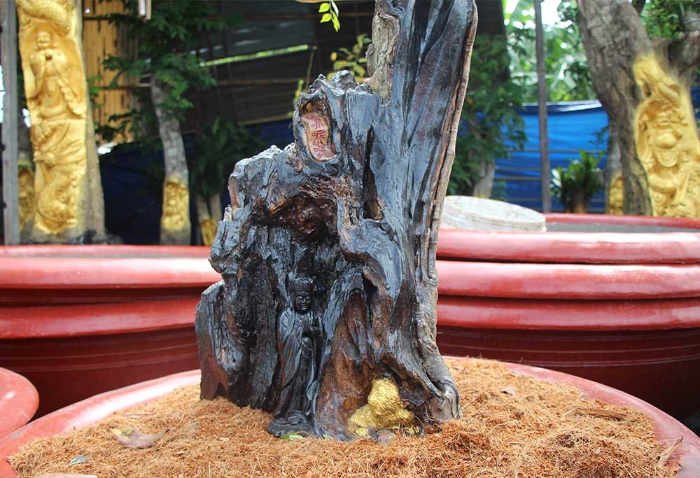 Chuyện lạ miền Tây: Quan Âm Bồ Tát cưỡi rồng vàng hiện hình trên cây khế