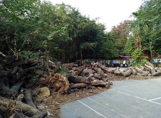Giật mình với 'nghĩa địa gỗ' khổng lồ giữa Thủ đô