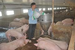 Bộ Nông nghiệp ra văn bản yêu cầu Hà Nội chấn chỉnh