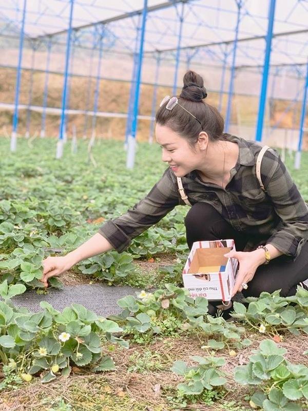 Nhật Kim Anh hào hứng ngồi bứt những trái dâu tây chín trong chuyến du lịch Đà Lạt.