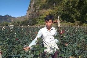 Bỏ thủ đô lên núi trồng hoa hồng, trai trẻ 9x thu tiền đều tay