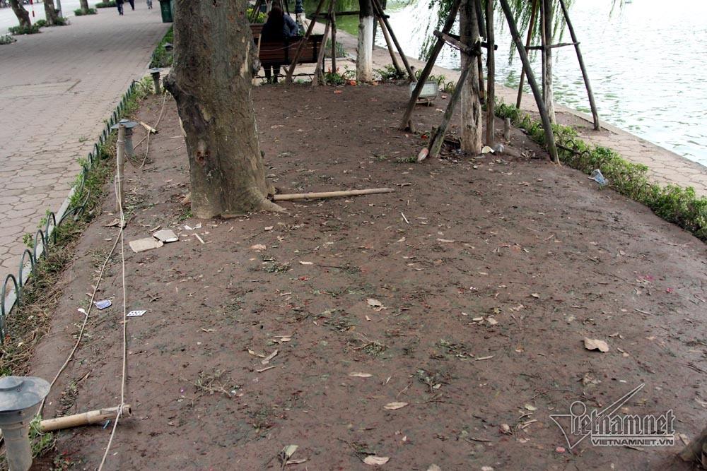 Sửng sốt vườn hoa hồ Gươm sáng nay bị san trụi sau giao thừa