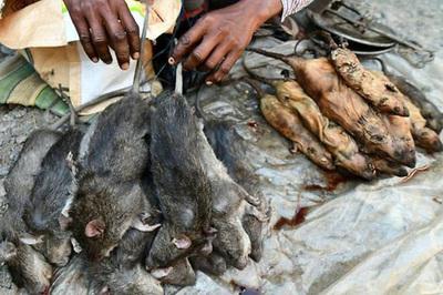 """Đến khu chợ chuyên bán món """"đặc sản"""" thịt chuột"""