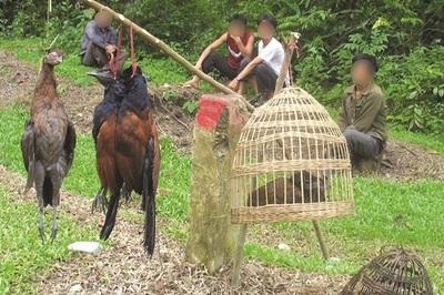 Wildlife trafficking still at serious levels in Vietnam