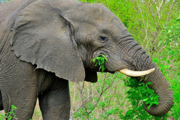 Intel đưa giải pháp dùng AI để bảo vệ động vật hoang dã