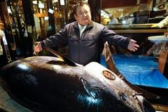 Cá ngừ khổng lồ, đại gia sẵn sàng chi hàng chục tỷ