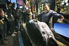 Con cá ngừ đắt kỷ lục: 300 kg giá 70 tỷ