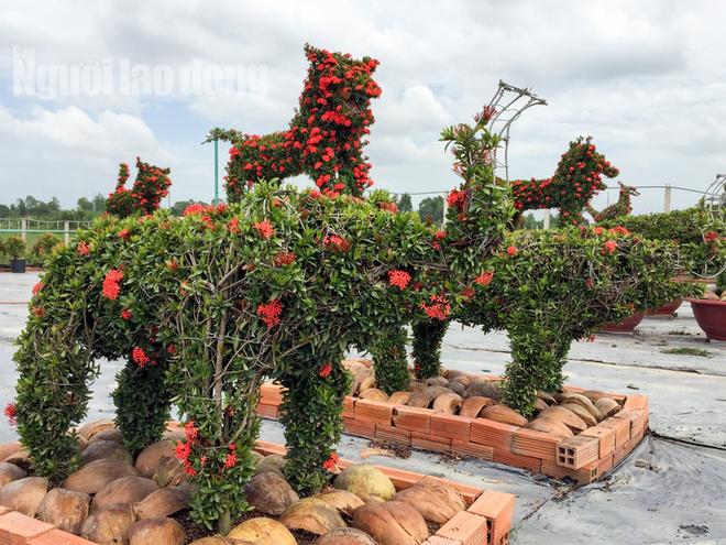 Biến cây trồng bờ rào thành kiểng 'Long Quy' giá 400 triệu/cặp