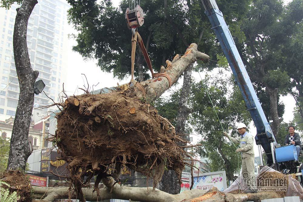 chặt cây,Hà Nội,xén vỉa hè