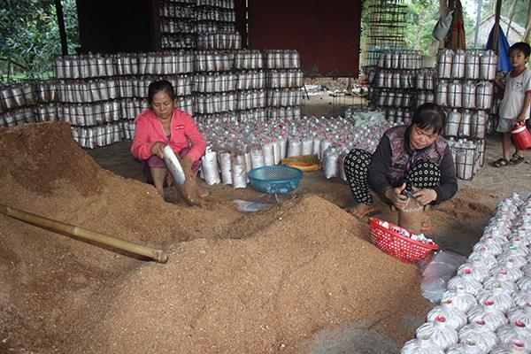 Nấm tươi tăng giá, nông dân sợ nhất 'đụng hàng' với nấm Trung Quốc