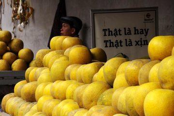 Bí kíp chọn 'trái vàng đặc sản' chính hiệu của chủ vườn bưởi Diễn