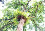Genetic resources of local plants, animals alarmingly decline