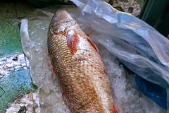 Cá lạ nặng 5kg ở Quảng Ngãi, trả 150 triệu chưa bán