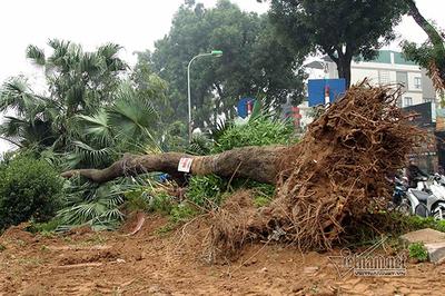 Chặt mỗi cây ở đường Láng, Hà Nội chi hơn 7 triệu đồng
