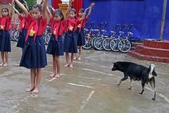 12 học sinh tiểu học bị chó cắn trong trường