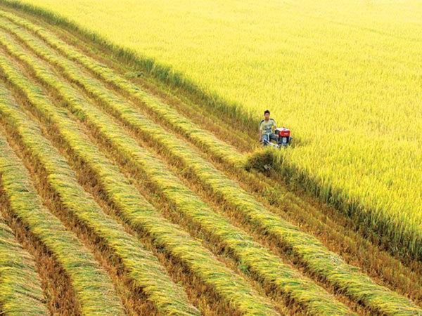 nông nghiệp ASEAN,hợp tác nông nghiệp